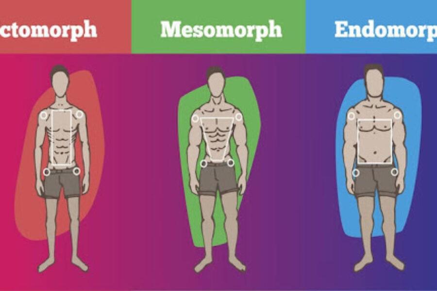 SOMATOTIPO: endomorfo, ectomorfo, mesomorfo a quale somatotipo appartieni?